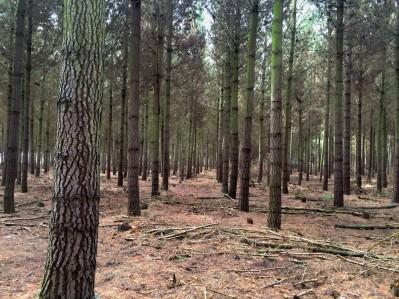 Vysazený les