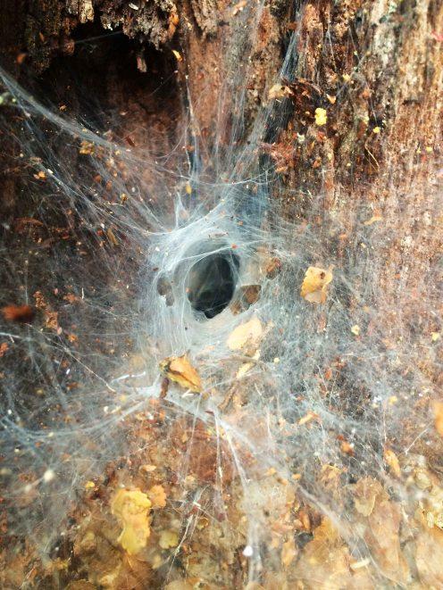 Arachnofibia