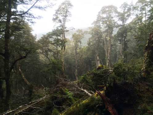 Tajuplný les...