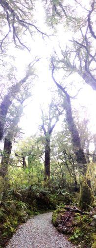 Stromy jsou hustý.