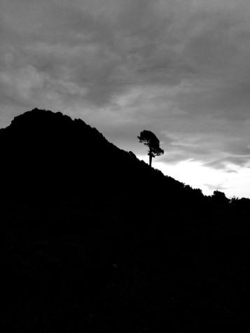 Ofouklý strom.